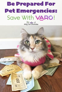 Be Prepared for Pet Emergencies: Save with Varo! - cat with monopoly money
