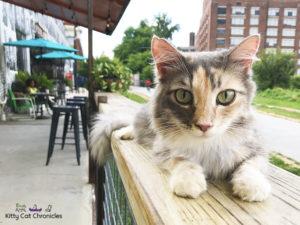 Exploring Atlanta with Sophie - cat on Atlanta BeltLine