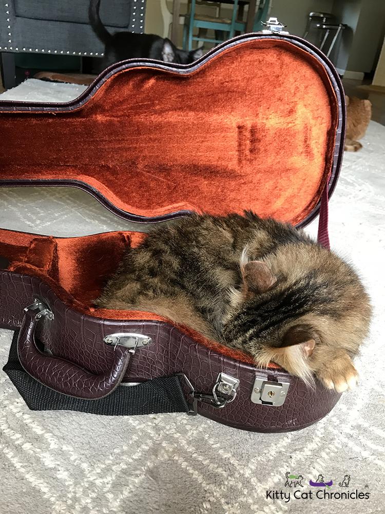 cat in ukulele case