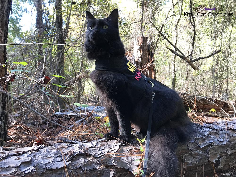 A Fun Fall Adventure at Brown's Mount - black cat hiking