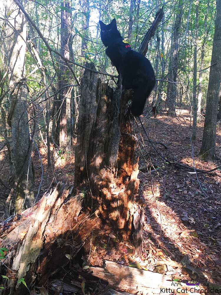 A Fun Fall Adventure at Brown's Mount - cat climbing