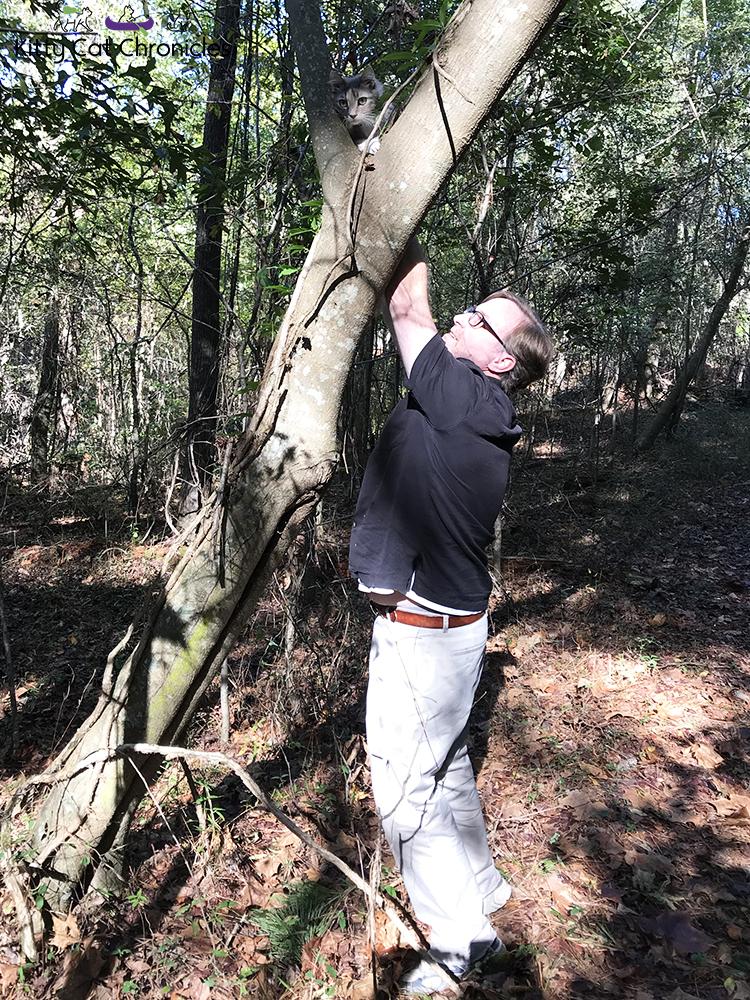 A Fun Fall Adventure at Brown's Mount - tree climbing cat