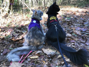 A Fun Fall Adventure at Brown's Mount - hiking cats