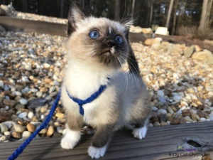 Gryphon the Kitten in the backyard