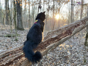 A Kylo Ren Day Hike at Hitchiti Loop Trail - cat hiking