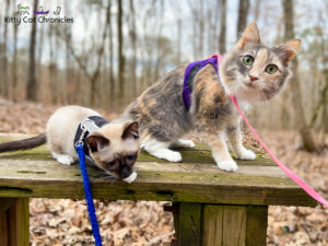 Hiking Hitchiti Loop Trail with Sophie and Gryphon - hiking cats