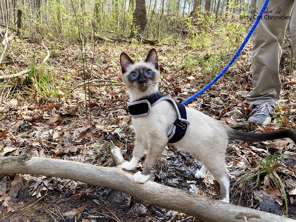 Our Athens Weekend Getaway - hiking cat