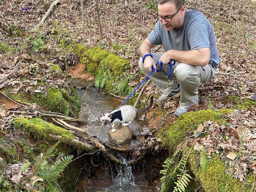 Our Athens Weekend Getaway - cat crossing creek