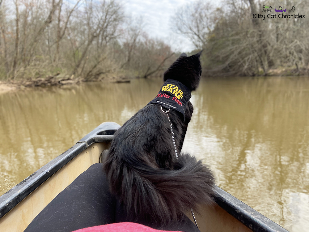 Our Athens Getaway - black cat on a canoe