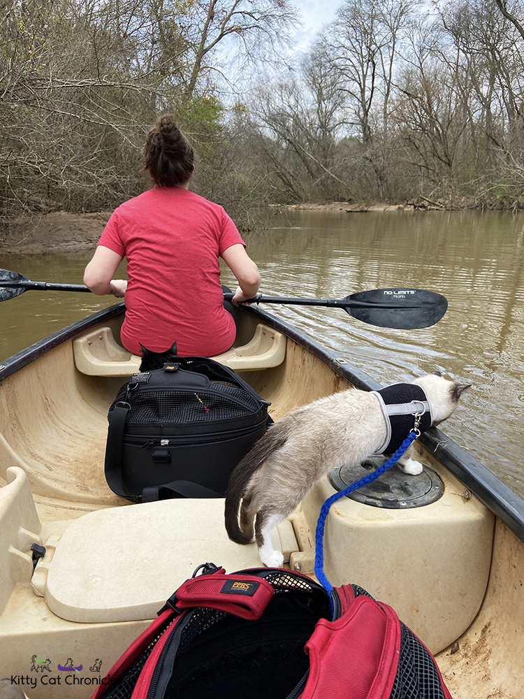 Our Athens Getaway - cats on a canoe