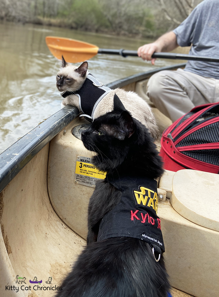 Our Athens Getaway - canoeing cats