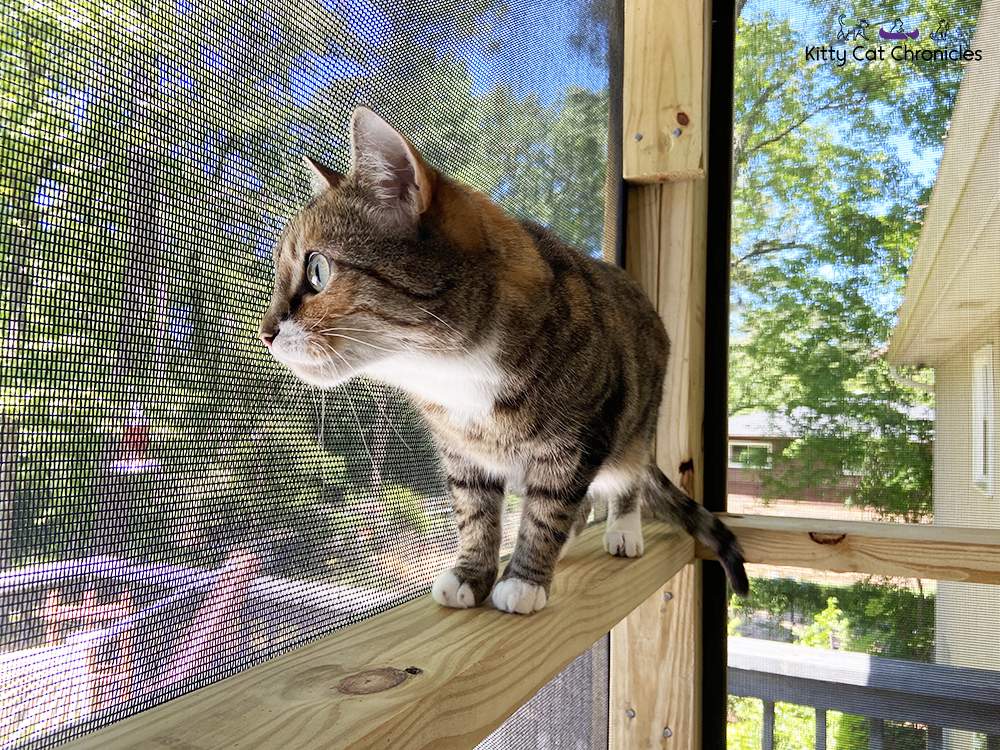 Delilah on the catio