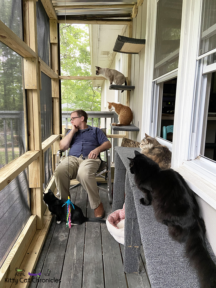 catio hang out time