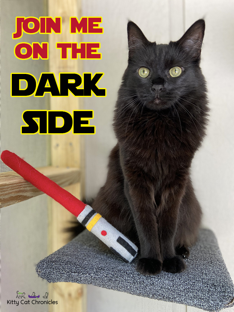 May the 4th, Kylo Ren - Join Me on the Dark Side