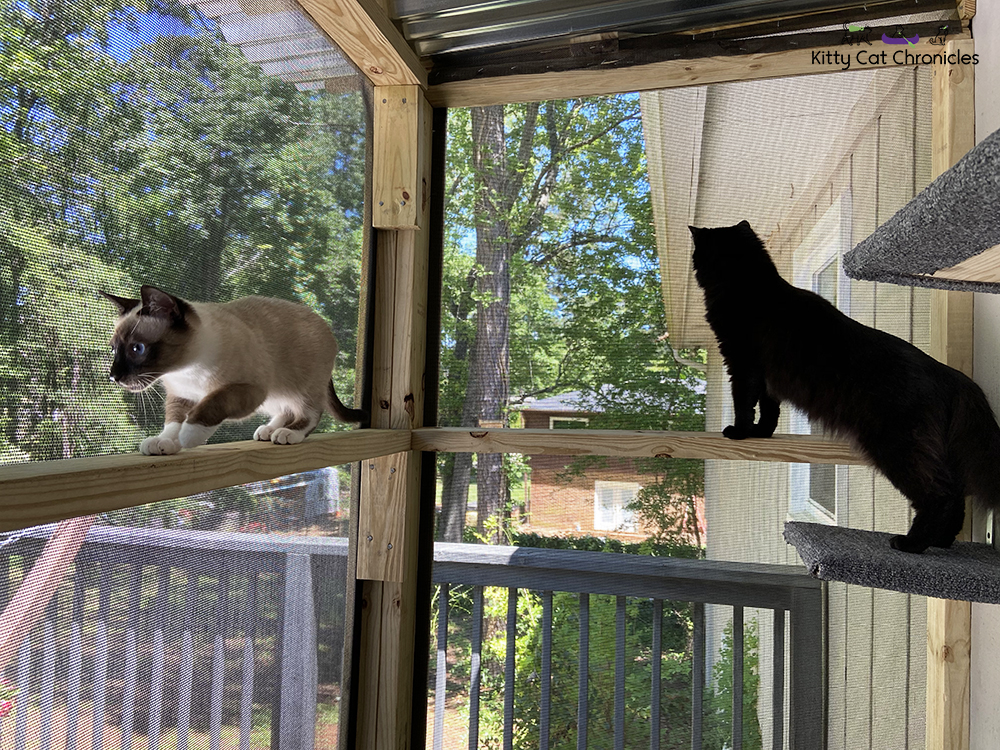 cats on a catio