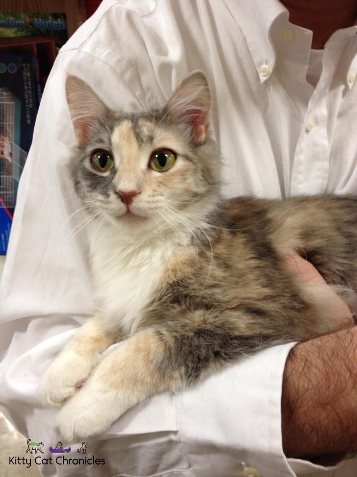 Sophie adoption day