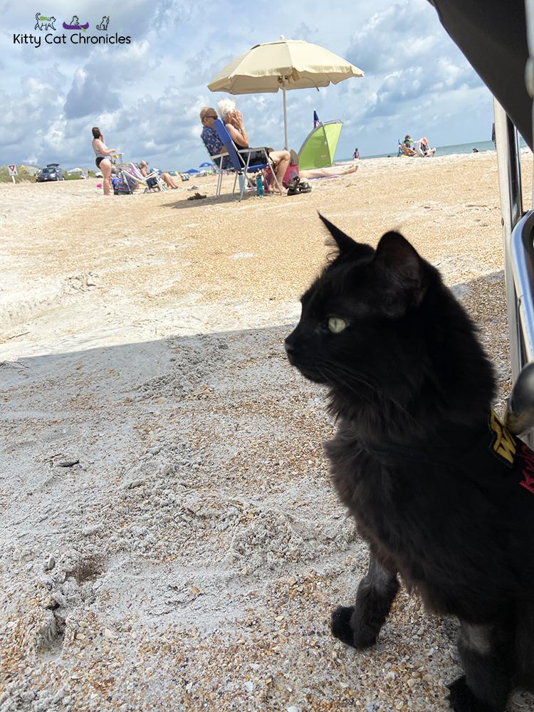 black cat on the beach