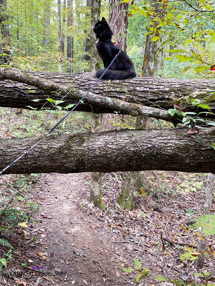 a black cat on a fallen tree