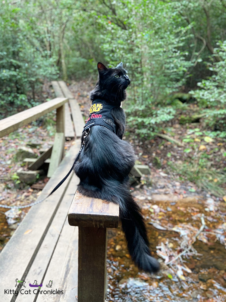 Kylo Ren's First Camping Trip - Cat Hiking at FDR State Park