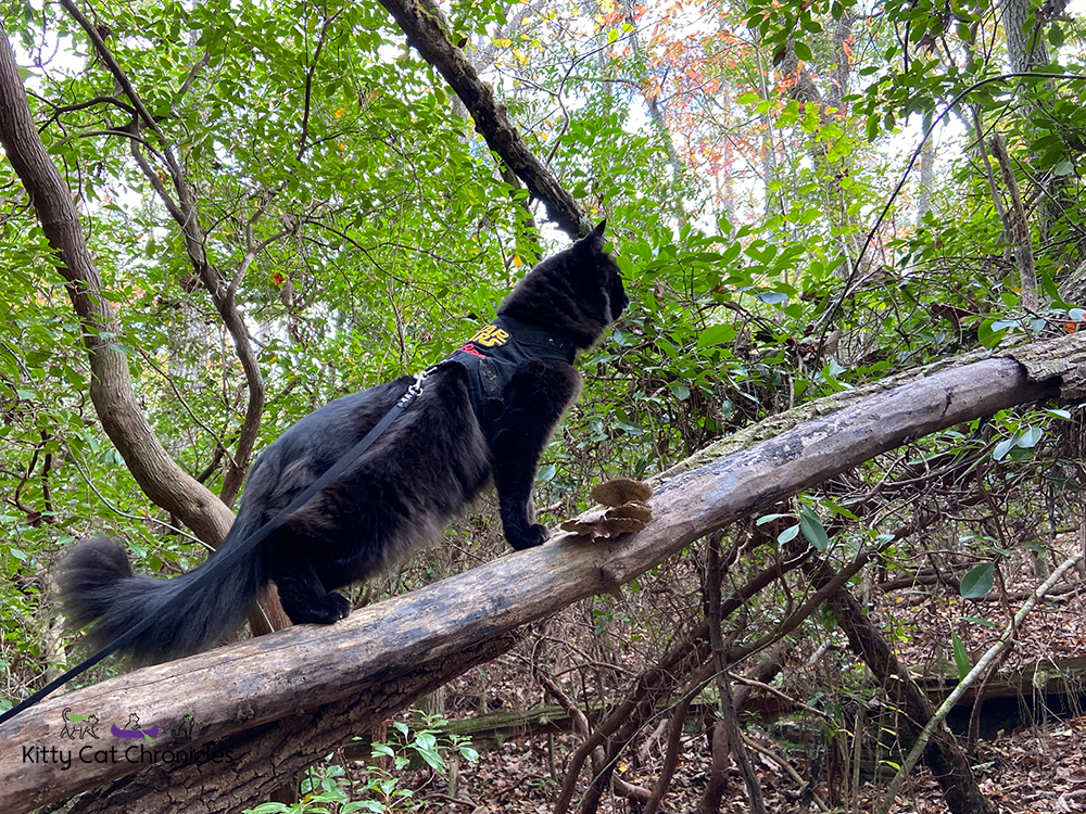 Kylo Ren's First Camping Trip - cat on a tree branch