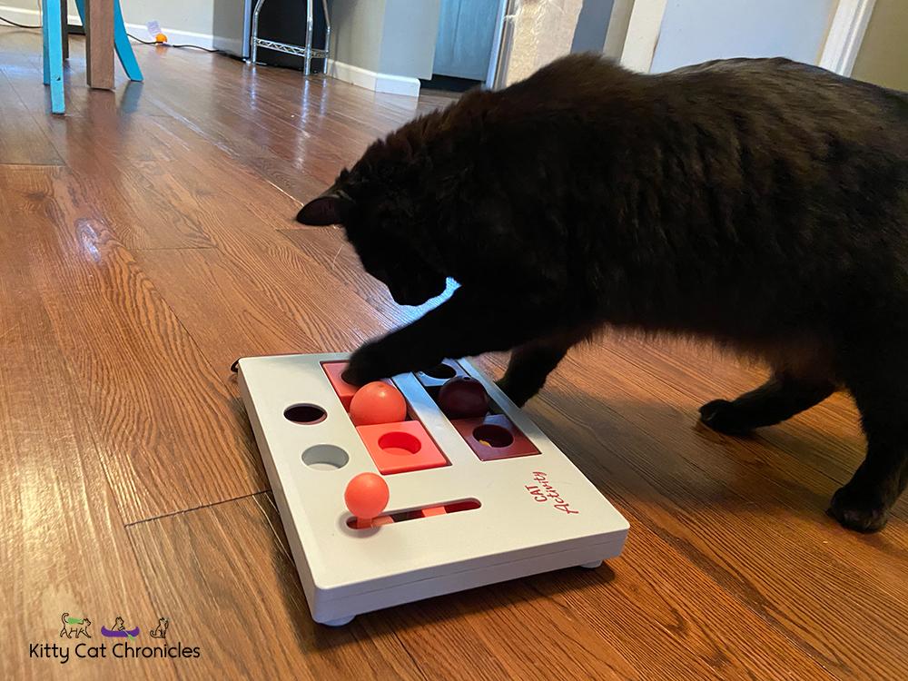 black cat with trixie cat activity puzzle