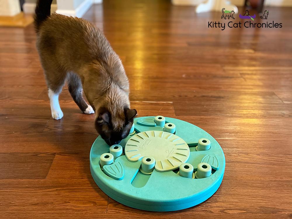 cat solving food puzzle