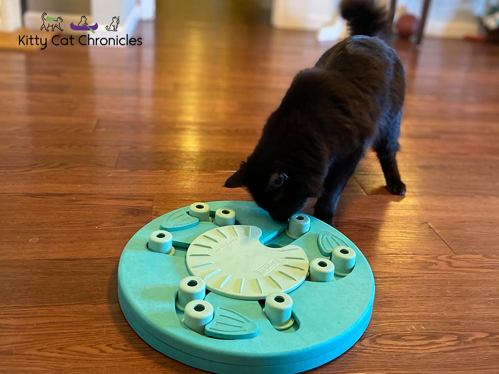 cat food puzzle - black cat