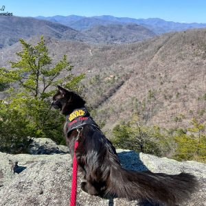 A Mountain Getaway with Kylo & Gryphon