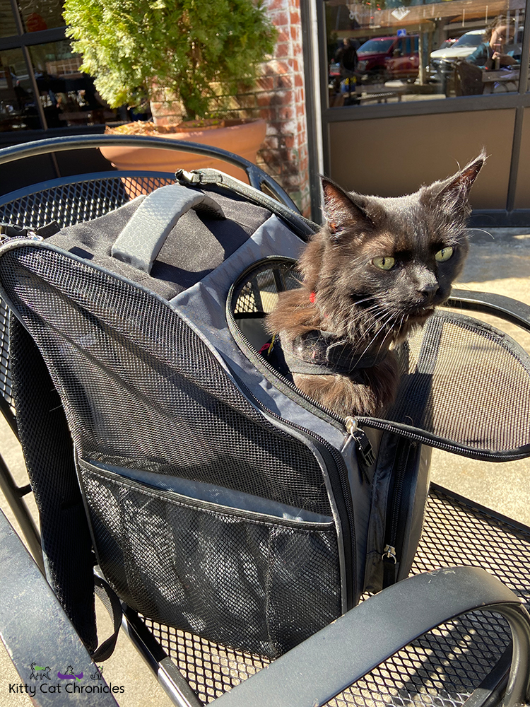 cat in a backpack carrier at a restaurant