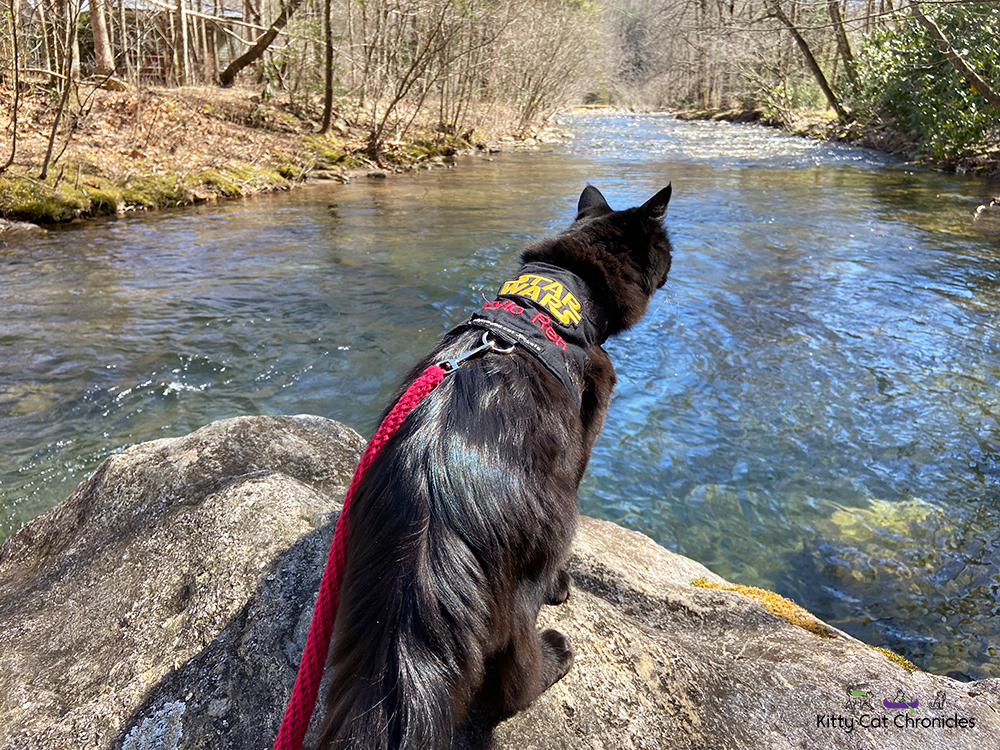 cat overlooking the Tallulah River