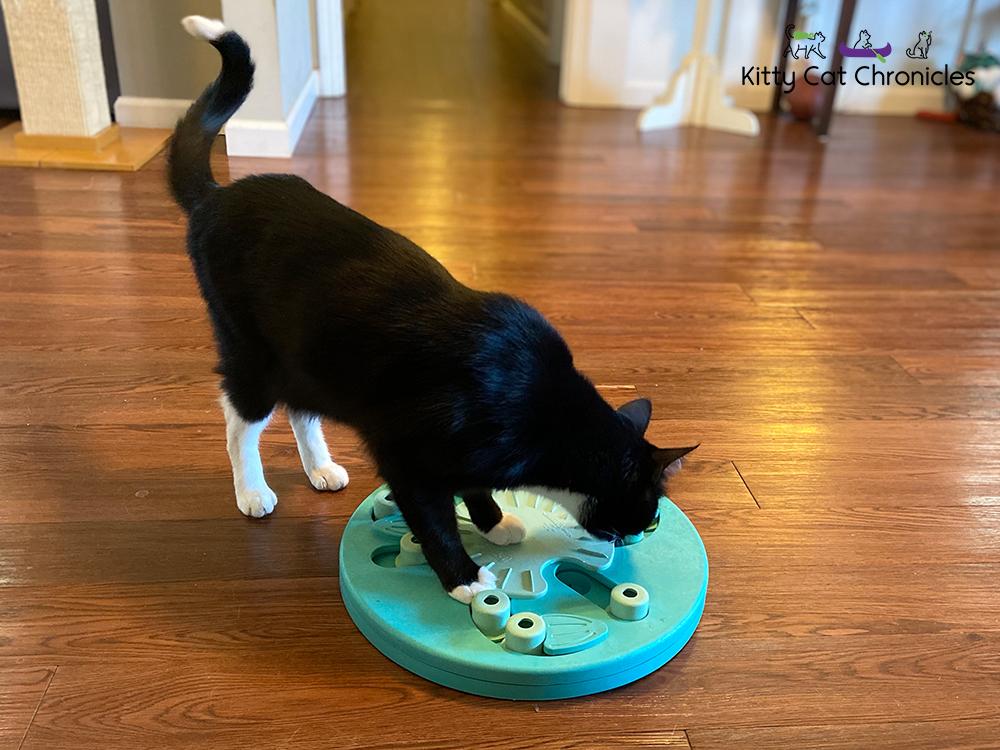 tuxie cat solving food puzzle