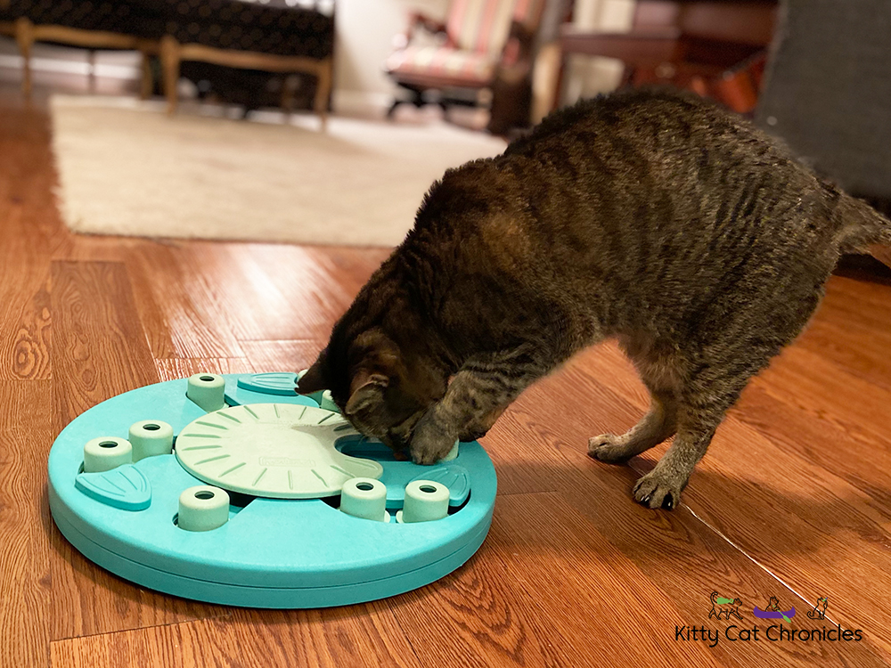 Food Puzzle Wars - tabby cat solving food puzzle