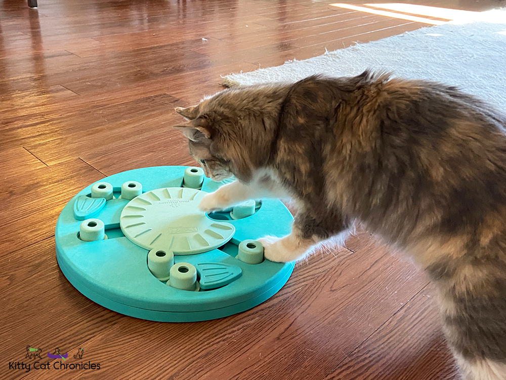 Food Puzzle Wars - cat solving a food puzzle