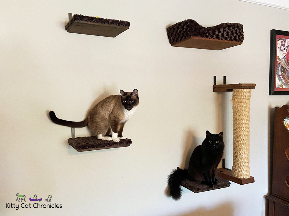cats on a cat wall