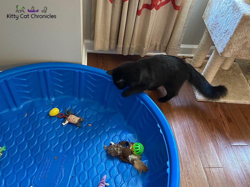 black cat in kiddie pool hunting easter eggs