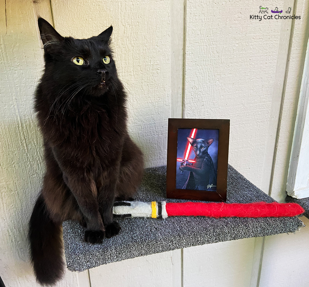 Black cat Kylo Ren posing with lightsaber toy and cat Kylo Ren photo