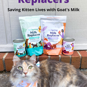 Tailspring Milk Replacers – Saving Kitten Lives with Goat's Milk