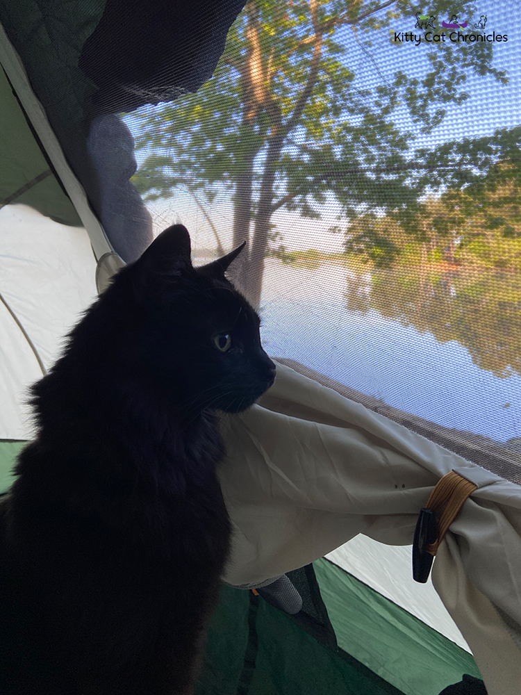 cat in a tent looking out the window