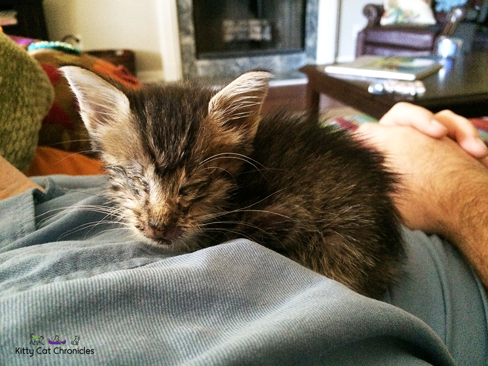 Milton the kitten with congenital defects