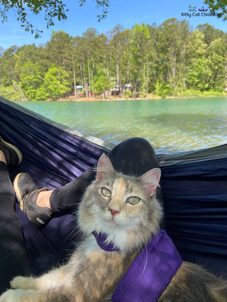 cat in a hammock beside a lake