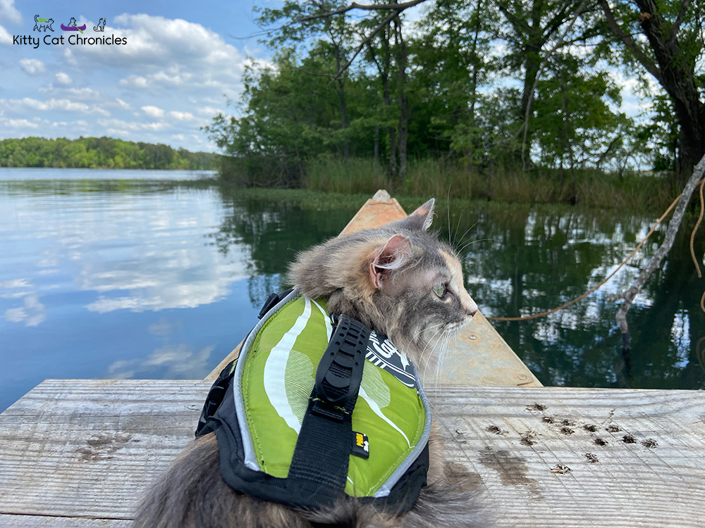 cat on a canoe wearing a life vest